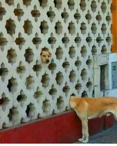 Dog appears to be split personality