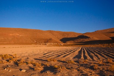 Solo arado e plantado com quinua