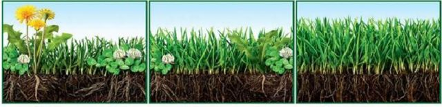 Fertilization compare