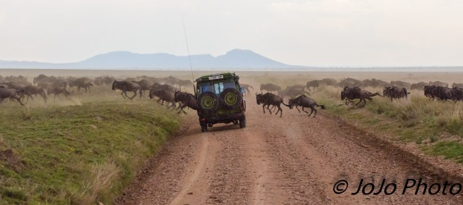 Wildebeest crossing the road in Serengeti National Park
