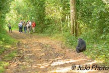 A Tourist Group and Chimpanzee in Kibale National Park