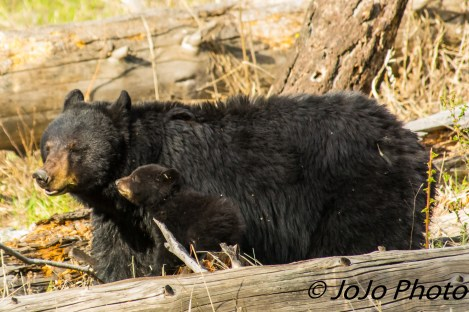 Rosie and her shy cub (maybe she's a girl?)