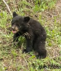 Rosie's shy cub
