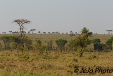 Chaka Camp Vista in Serengeti National Park