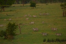 Zebra seen from Hot Air Balloon Ride in Serengeti