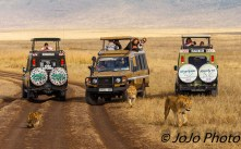 Lions and cub next to Duma Vehicle in Ngorongoro Crater