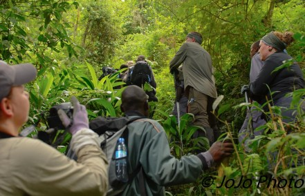 Gorilla hiking group enroute to see the Mubare Gorilla Family