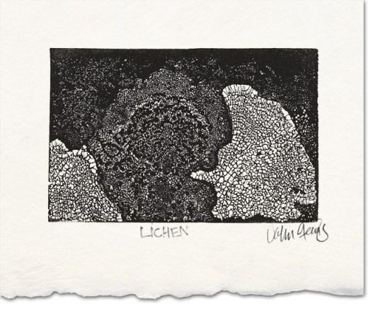 lichen wood engraving