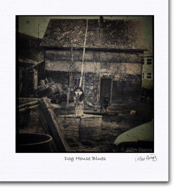 dog_house_blues