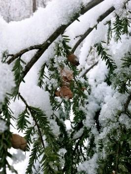 First Snow C