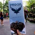 美しい!WDW パンドラ:ザ・ワールド・オブ・アバター ウォーキング #ディズニー #Disney #followme