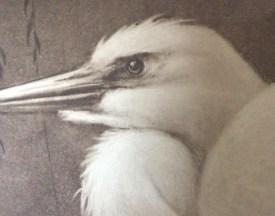 Great Egrets H. Verstijnen