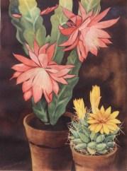 Henk van Gemert zeefdruk,screen print,cacti, cactus, zeefdruk