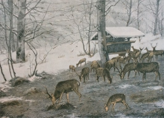 A Moilick 1898, feeding deer, lithography.
