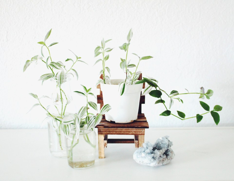 Why You Should Try Water Propagation with Houseplants | Joi-Knows-How.com |