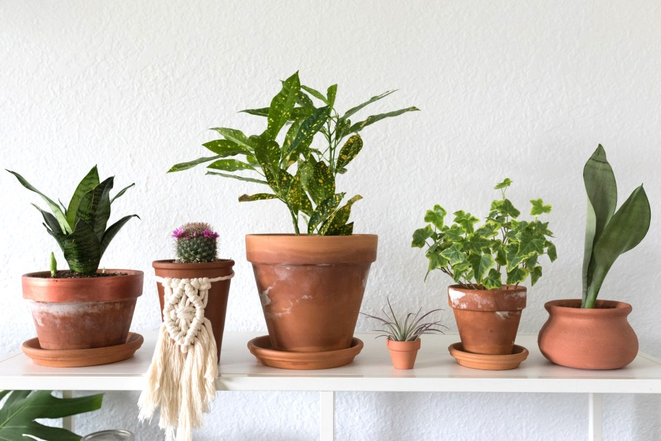 Why You Should Plant in Terracotta Pots