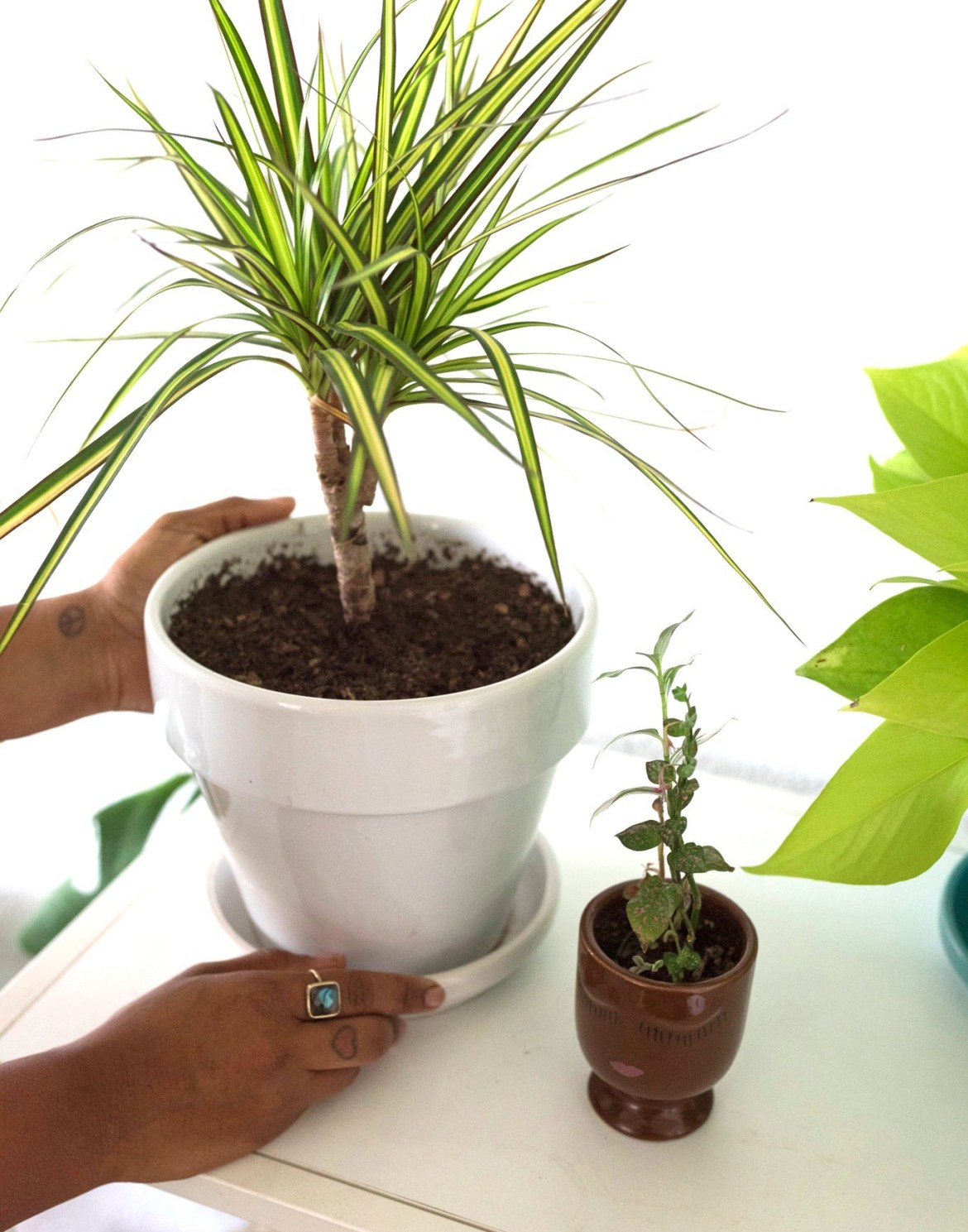 12 Tips for Happy Houseplants | Joi-Knows-How.com