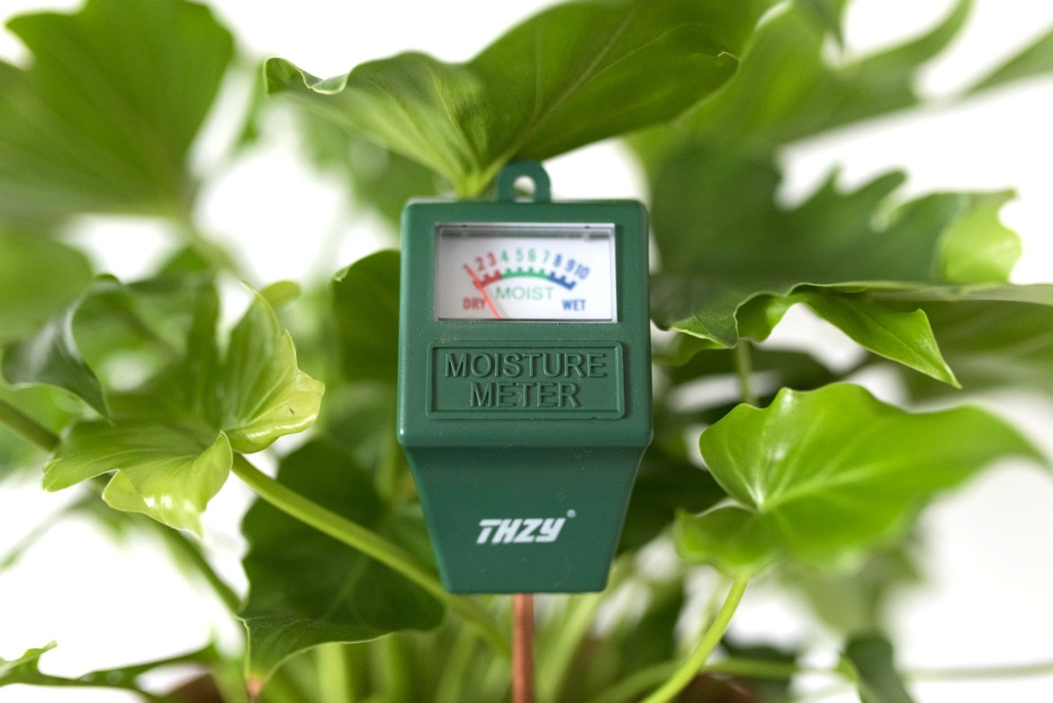 Why You Should Invest in a Moisture Meter for Your Houseplants | Joi-Knows-How.com