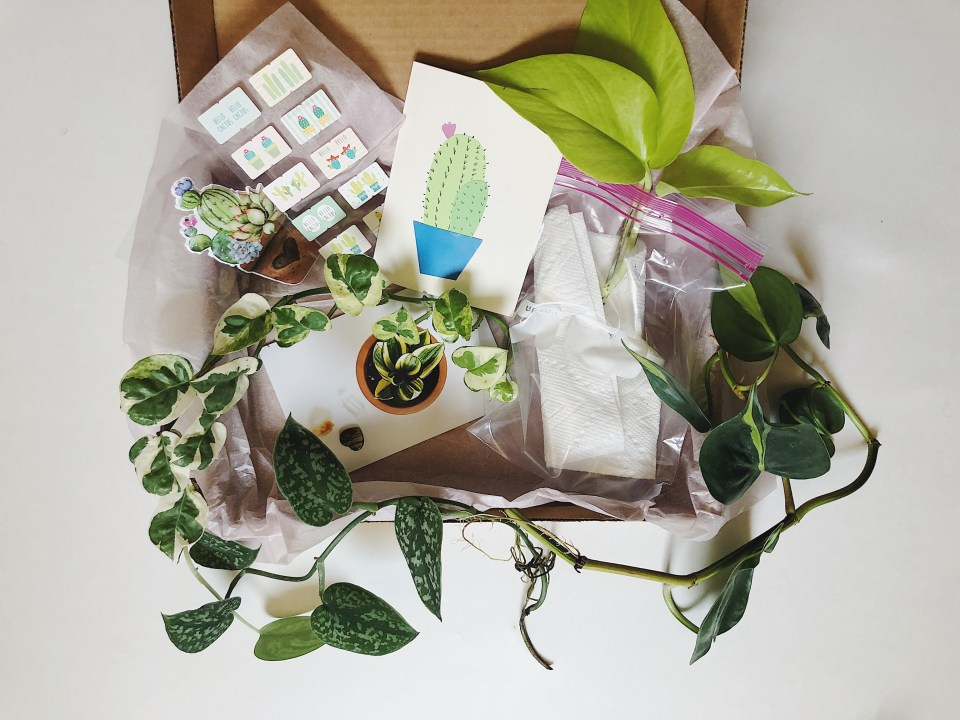 How to Send a Plant Care Package
