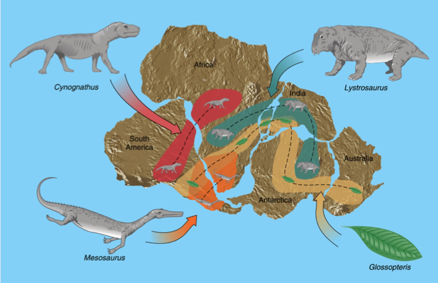 July 26 Blog Exploring The Long Lost Continent Of
