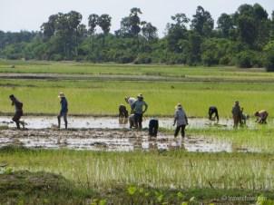 cambodia countryside