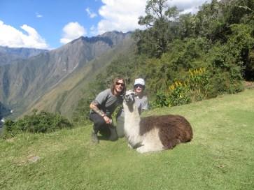 Posing Llama