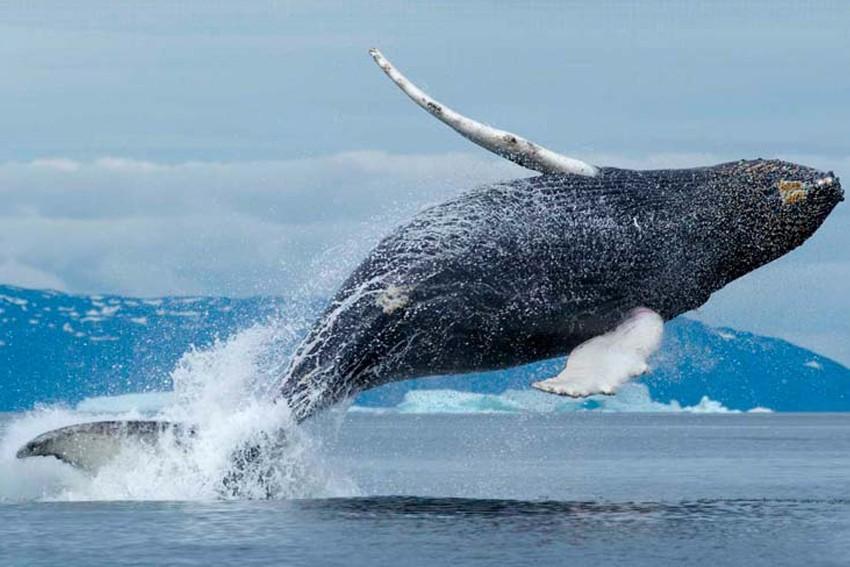 Самые большие киты на планете