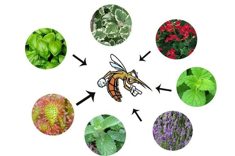 5 способов. Как защититься от комаров?