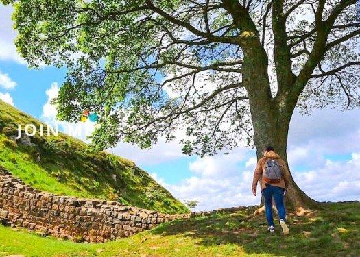 哈德良長城 Hadrian's Wall:羅賓漢樹(Robin Hood Tree)