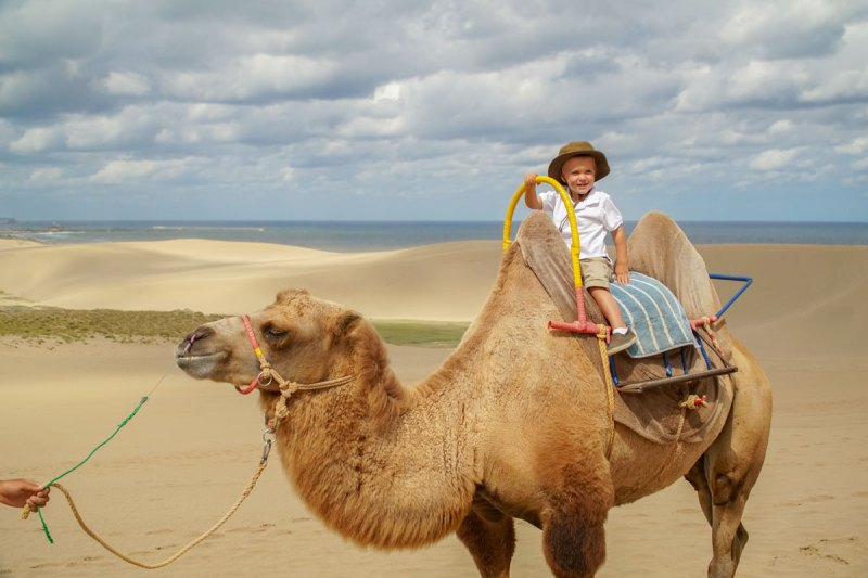 Boy rides a camel at the Tottori Sand Dunes