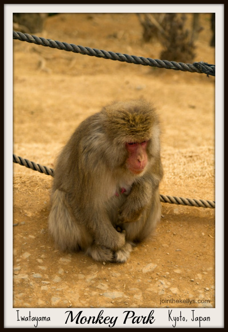 The Iwatayama Monkey Park