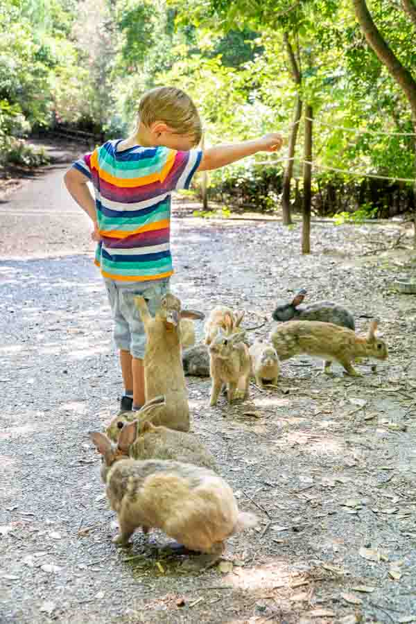 Rabbit Island boy feeding carrots to rabbits