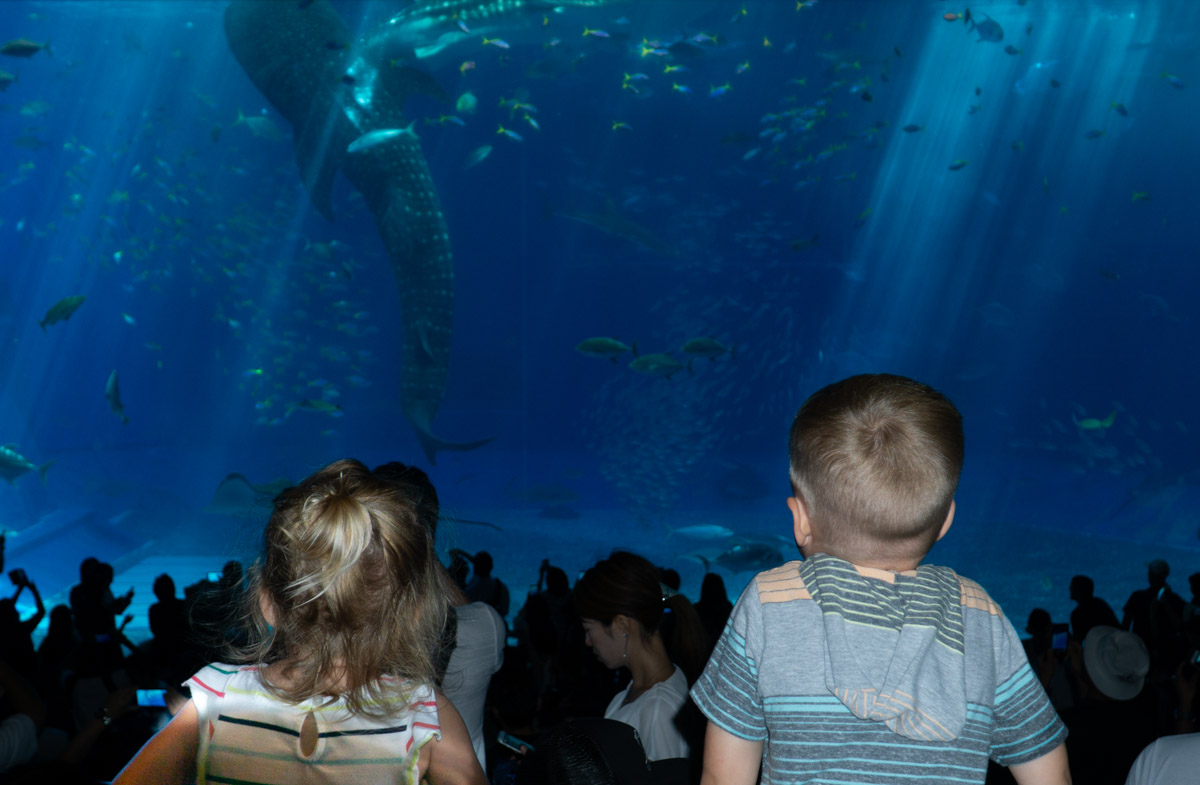 Okinawa Aquarium kids watch the whale shark tank
