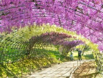 Feature-Wisteria-Tunnel