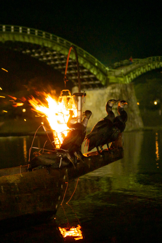 Ukai cormorants by the kintai bridge at night