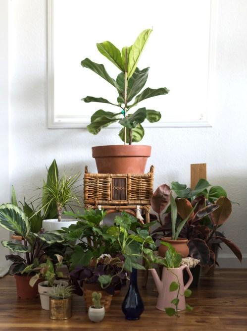 plant care, self care, plant mom, houseplants, multi-passionate creative, joi knows how, D'Ana Joi