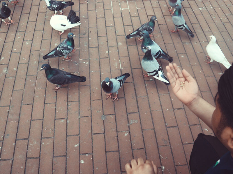 bird feeding in Fort Santiago