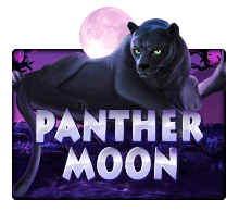 Joker Slot - Panther Moon