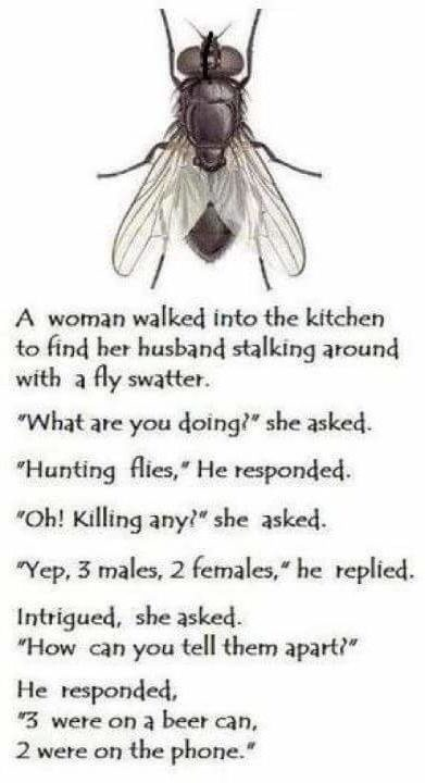 How to identify male and female flies