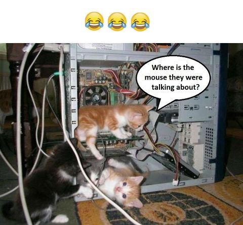 Where is the mouse
