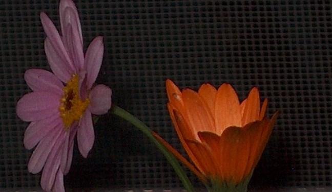 Violet et Orange 005