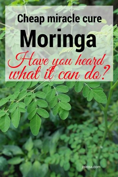 The low cost, miracle working tree moringa