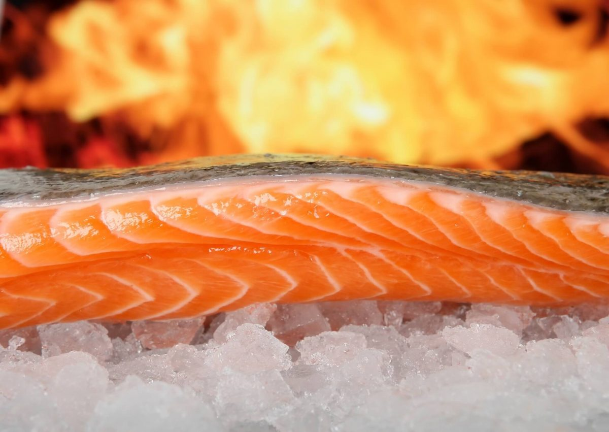 a fillet of salmon on ice