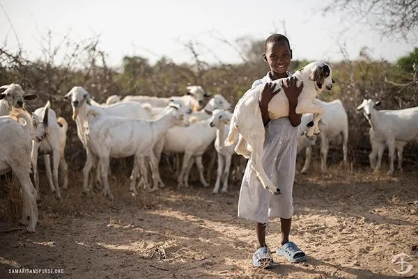 Give a goat and change the world