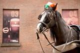 Guinness Horse