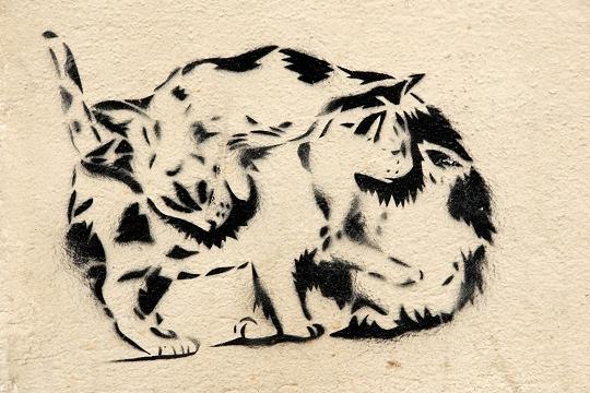 chats par miss. tic