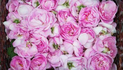 l'huile essentielles de Rose de damas est un anti-âge d'excellence