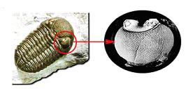 Ojo del Trilobite