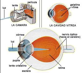 ojocerebro
