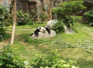 panda-gros-vautre-abalourdir